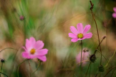 *** гелиос природа цветы 44-6