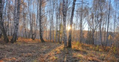 ЪЪ осень утро лес солнце