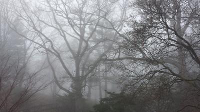 4 утро лес туман