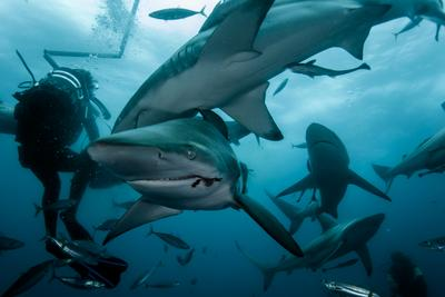Обед Акулы Акула Море Океан