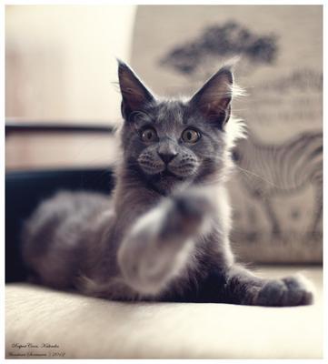 не буди во мне зверя кот, Kalvados
