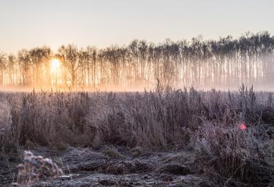 Утро туманное, утро седое... зима лес поле рассвет солнце трава кусты небо мороз деревья