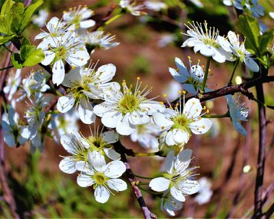 Цветение весна природа цветение
