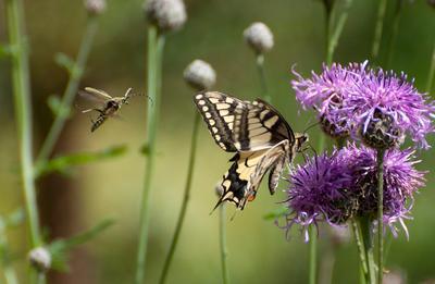 Случайная встреча Бабочка лето насекомые
