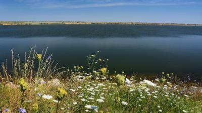 Весеннее разнотравье... небо цветы река