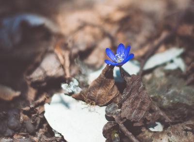 Начинается жизнь Цветок синий листва