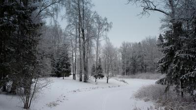 Зимняя зарисовка Зима лес речка деревья