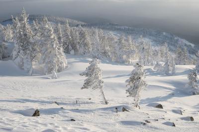 ...На снежном ветру...