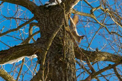 Мастер маскировки белка лес зима дерево