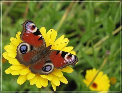 Бабочка Бабочка, ботанический сад