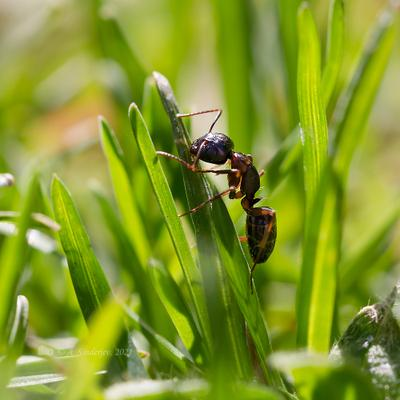 Муравей на траве насекомое муравей макро