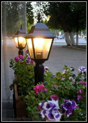 Уютный вечер в летнем кафе фонарь лето кафе цветы вечер