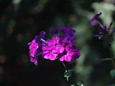 * в лучах солнца * very long distance macro sony dsc-hx200v moscow suburb close-up flowers carl zeiss vario sonnar lens