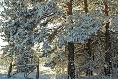 *врата) зима природа лес мороз прогулка въезд рамка снег солнце тени сосны сибирь
