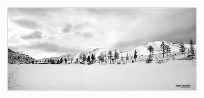 Черно-белый вечер Зима Тундра Вечер