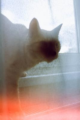 Охотник за Кормом кот фотомодель модель коты животное животные котики