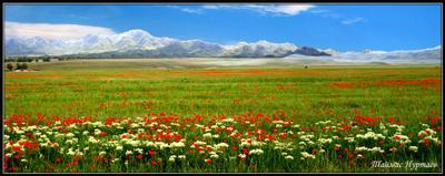 Казахстан.Национальный заповедник Алтын-Эмель.