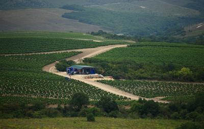Виноградник виноградник