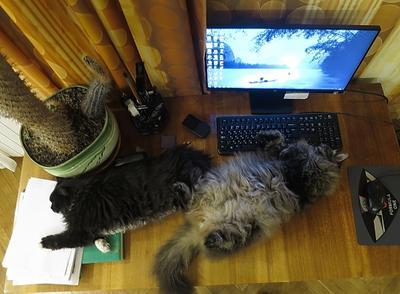 Ну никак не дают работать, собаки! :)