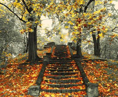 Осенняя лестница*** осень