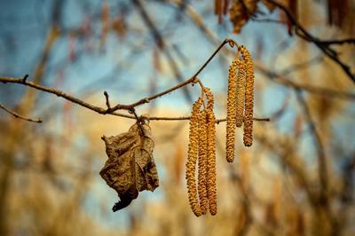 И сошлись осени остаток и весны начало
