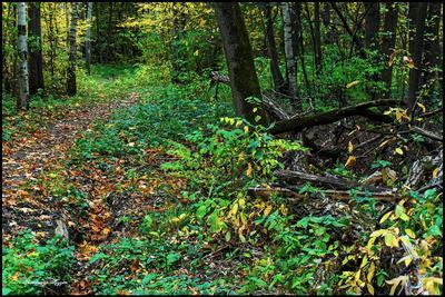Дорожки, которые мы выбираем. Измайловский лес