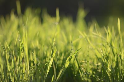 Трава весна природа вдохновение