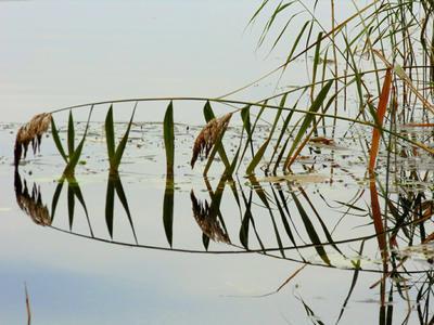 Отражение природа отражение