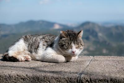 Бездомная кошка Кошка Монсеррат путешествия