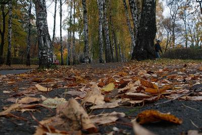Вновь листья гибнут под ногами.. А мы всё мним себя богами... осень листва