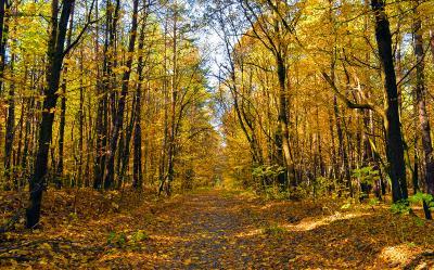 В лесу осеннем
