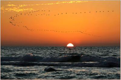 улётный закат 2 Закат,птицы