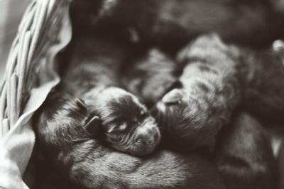 1 день. щенки собаки малютки