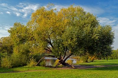 Дерево (стойкость) СПб парк природа осень