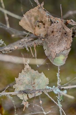 Лесной гербарий