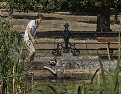 Без помощи хозяина из фонтана не выбраться собака фонтан
