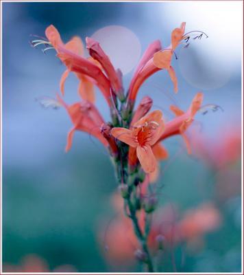 Вечерние цветы Цветы ,вечер ,бокэ