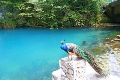 На Голубом озере абхазия озеро голубое павлин