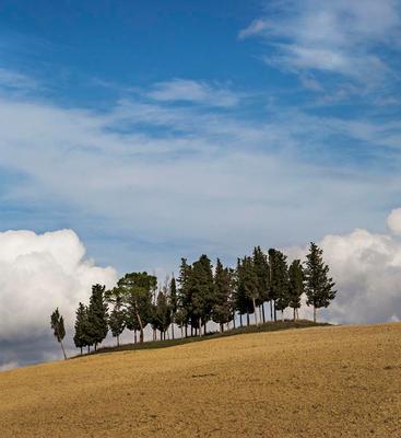 *Парящая  роща** Роща облака Тоскана рельеф пейзаж КРАСОТА