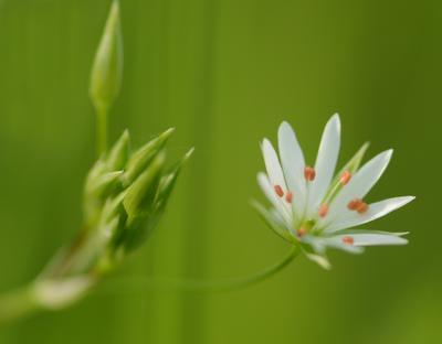 Нежность... луг цветок нежность