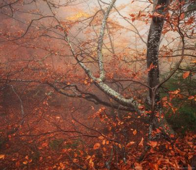 Туманное утро на Ай-Петри пейзаж крым лес туман горы ай-петри осень утро облака