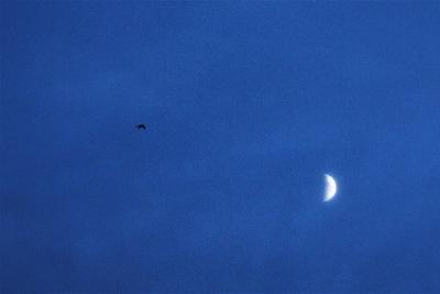 Птицы выше луны Владивосток вечер луна ласточка