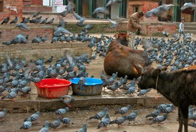 Ритуал Непал, Катманду, Дурбар сквер