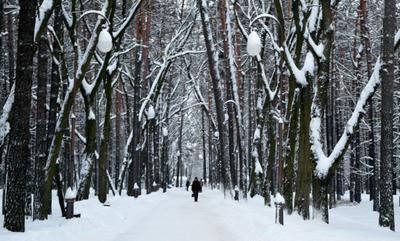белые будни городского парка будний день городской парк зима снег белый