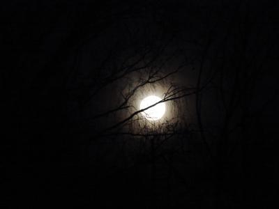 Лунная ночь луна ночь