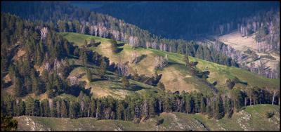Алтайская зарисовка Алтай Горы Лес Склон
