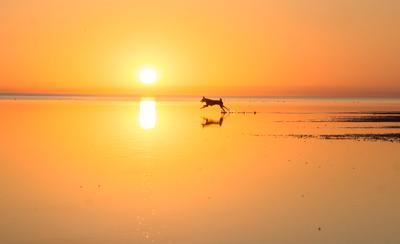 солнечный зайчик море закат собака лайка Цуцык вода отражение солнце