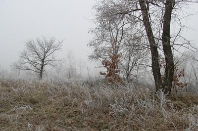 *** туман изморозь