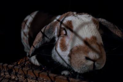 """""""Жизнь в клетке"""" кролик домашний клетка животное"""