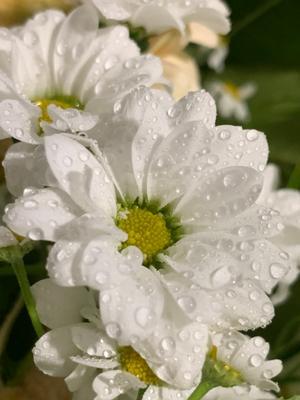 Цветочек и капельки